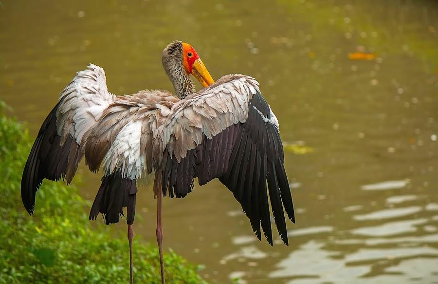 Break The Rules by Brothers Photography - Animals Birds ( bird, wild, stork, break the rules, wildlife, water birds, birds, animal,  )