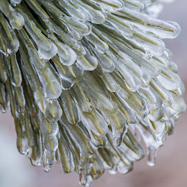 Frozen in Time by Rose Knott - Nature Up Close Trees & Bushes (  )