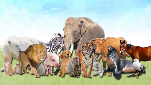 動物為幼兒及嬰兒