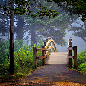 Bridge and fog by Gaylord Mink - Buildings & Architecture Bridges & Suspended Structures ( fog, bridge  in fog, bridge, woods, wooden bridge, path, nature, landscape,  )