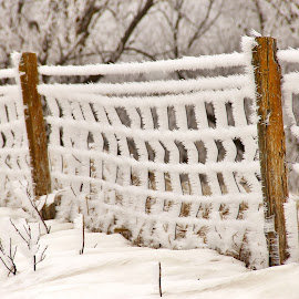 Feather Dusted by Pete Bouman - Landscapes Weather ( fence, wire, snow, white, frost )