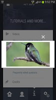 Screenshot of Audubon Hummingbirds At Home