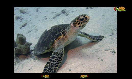 turtles spiele kostenlos