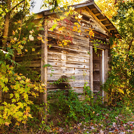 Abandoned by Carol Plummer - Buildings & Architecture Decaying & Abandoned ( building, old, trees, architecture, landscape, decaying, abandoned,  )