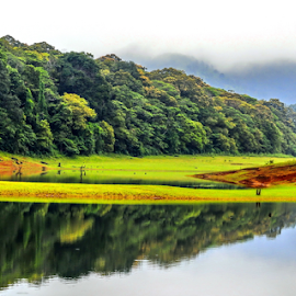 Thekkady, Kerala by John Anthony - Landscapes Prairies, Meadows & Fields