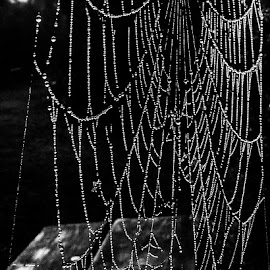 Wet Web Weaved (WWW) by Pierre Tessier - Nature Up Close Webs ( black and white, dew, spider, web, dew drops,  )