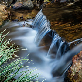 by Peter Schoeman - Landscapes Waterscapes ( water, long exposure, dflowers )