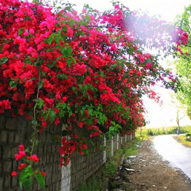 beautiful street out of our school by Tenzin Gyaltsen - City,  Street & Park  Street Scenes ( street, flower )