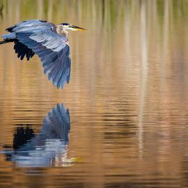 by Rodney Karstetter - Animals Birds