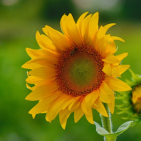 by Nikša Šapro - Flowers Flower Gardens (  )