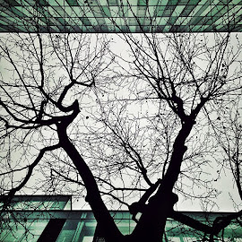 Archinature by Melinda Szente - Abstract Patterns ( wien, instagram, innerestadt, europe, simple, instamood, architecture, mobile photography, city, contrast, vienna, sky, nature, ilovewien, instadaily, buildings, branches, instafun, iphone5, igerswien, igersvienna, streetphotography, igers, green, windows, iphone, snapseed, iphoneography, winter, gigergasse, trees, street photo, austria )