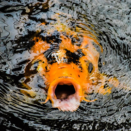 Fishy by Karthik Venkataraman - Novices Only Pets ( #fish, #pets, #cute, #aquaris, #water, #food )