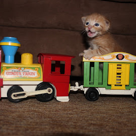 All aboard! by Tessa Zeller - Animals - Cats Kittens