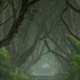 The Dark Hedges by Michael Kight - Landscapes Forests ( countryside, the dark hedges, beech trees, northern ireland, united kingdom )