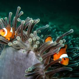 Found Nemo  by Luke Kill - Animals Sea Creatures