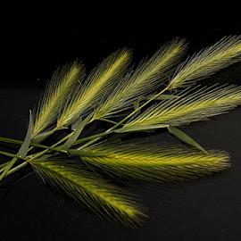 Grass Arrangement by Anjuli Shankhwar - Nature Up Close Leaves & Grasses (  )
