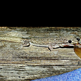 lizard and flying ant by Jaka Pamela P - Animals Reptiles