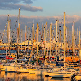 Sailboats in the harbor, Sète, France by Judith Dueck - Transportation Boats ( berth, skyline, craft, harbor, yacht, transportation, recreation, dock, city, sky, watercraft, pier, sail, marina, maritime, vessel, white, pacific, pleasure, fun, row, recreational, bay, lines, tied, wharf, nautical, reflection, europe, colorful, ocean, sail boat, sun, transport, sunny, mediterranean, water, beautiful, sailboat  france, sport, bay area, boat, masterpiece, blue, color, sunset, background, moored, cloud )