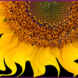 Sunflower by Joerg Schlagheck - Digital Art Things ( apple., nice, sunflower, yellow, boat, tablespoon, black, goose, close )