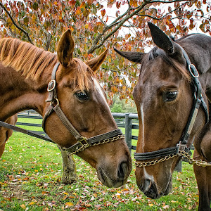 2 Horses-2.jpg