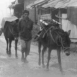 hill tribe's cargo by John Htet - Transportation Other ( myanmar, donkey, transportation, travel, people )