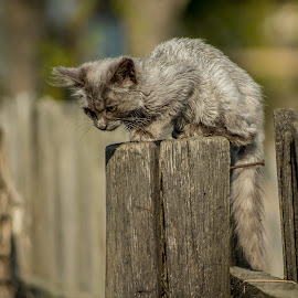 Dog watching I by Tudor Migia - Animals - Cats Kittens ( fence, kitten, cat, post, gray, bokeh )