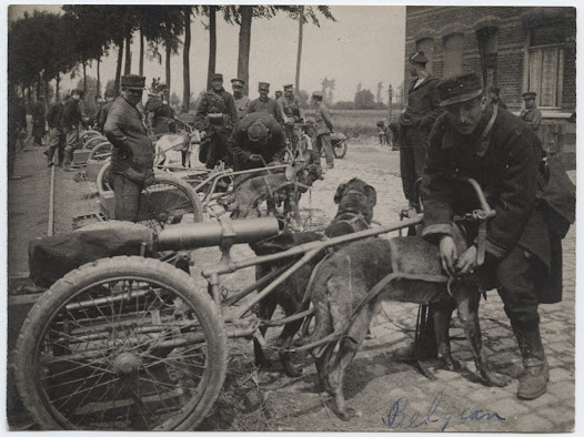 Belgian soldiers with machine gun carts pulled by dogs.