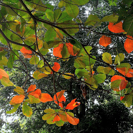 some colourful leaves by Arka Sengupta - Novices Only Flowers & Plants ( nature, colorful, leaf, leaves, multicolored, colours )
