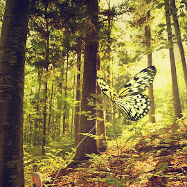 Finding my way by Gabriela Lupu - Digital Art People ( butterfly, forest, kidd, boy, small )