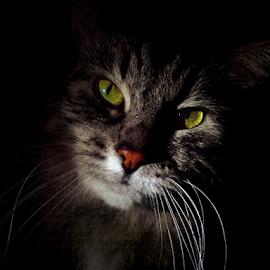 A little about look by Jurijs Ratanins - Instagram & Mobile Other ( look, mobilography, cat, pet, portrait, animal )