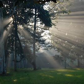by Renato Zubieta - Nature Up Close Trees & Bushes