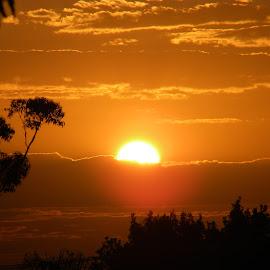 Sunrise by Eryn Jasperse - Landscapes Sunsets & Sunrises ( orange, trees, yellow, sunrise, black,  )