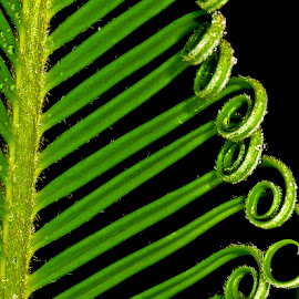 Fern by David Winchester - Nature Up Close Leaves & Grasses