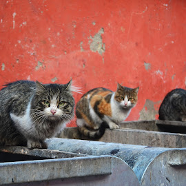 Kediler by Hüseyin Efe - Animals - Cats Portraits ( balat, türkiye, i̇stanbul, kedi, efe )