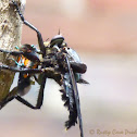 Giant Blue Robber Fly
