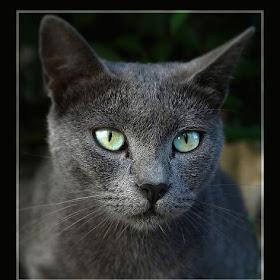 Cats eyes_1000.JPG