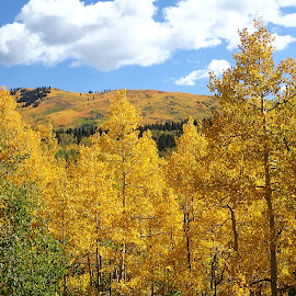 Golden Hills by Donald Henninger - Novices Only Landscapes ( natural light, mountains, fall colors, colorado, aspens )