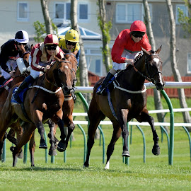Ayr Races at the five furlong marker  by Stephen Crawford - Animals Horses ( course, paul, gaw, horses, racing, ayr, races, fun, running,  )
