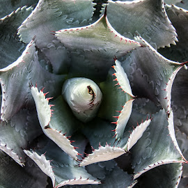 Cactus by Carrie Karki - Nature Up Close Leaves & Grasses (  )