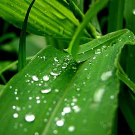 by Vinayak Pradeep - Nature Up Close Other plants