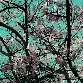 Entanglement by Diego Beca - Nature Up Close Trees & Bushes
