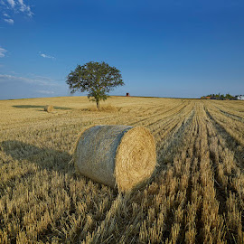 Sani Wheat Fields June 2014 by Fokion Zissiadis - Landscapes Prairies, Meadows & Fields ( sani wheat fields landscape )