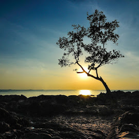 Silhouette of Tree by Prihanda Muhardika - Landscapes Sunsets & Sunrises ( tree, sunset, silhouette, beach, landscape )