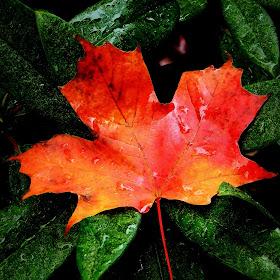 brilliant leaf.jpg