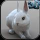 Real Rabbit Simulator