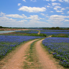 Lake Travis by Kelley Ahr - Landscapes Prairies, Meadows & Fields ( april 2014, bluebonnets )