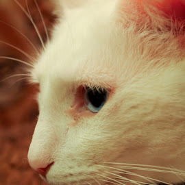 by Brooke Beauregard - Animals - Cats Portraits