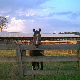 Lone Horse by Darlene Lee - Animals Horses