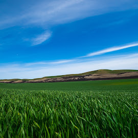 Eastern Washington Forever by Gary Piazza - Landscapes Prairies, Meadows & Fields ( sky, blue sky, grass, prairies. hills, fields )