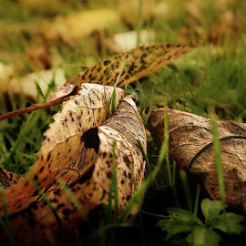 by Ksenija Glavak - Nature Up Close Leaves & Grasses (  )